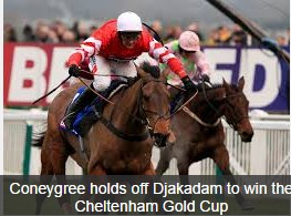 The Gold Cup Horse