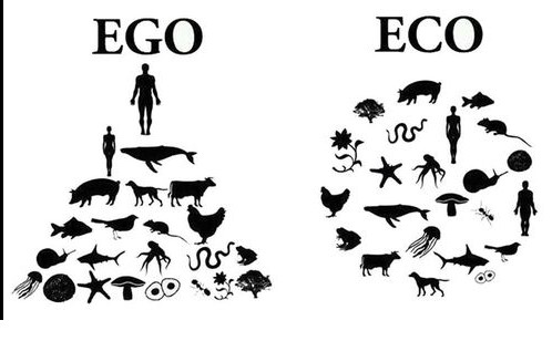 ego eco