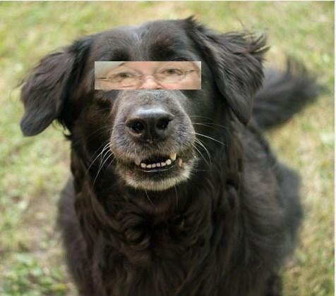Fed Yellen  Dog Bark