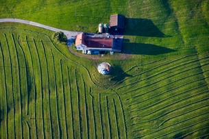 Over 7,000 farms get lower subsidies due to irregularities