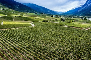 Strong Swiss agricultural output recorded despite droughts